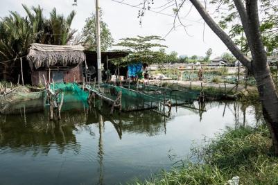 Fish farm near saigon