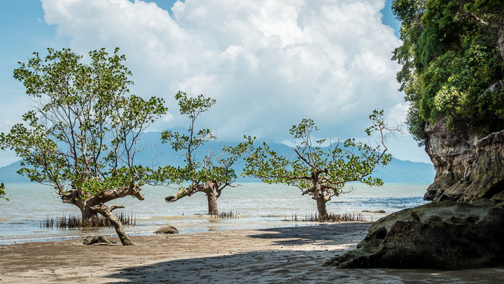 Mangroves protect the shoreline
