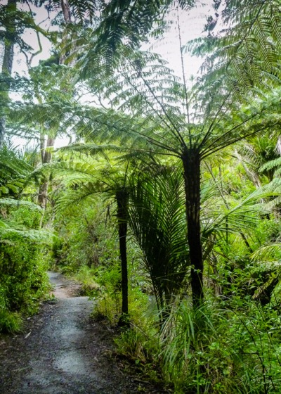 Silver tree fern -- a new Zealand icon