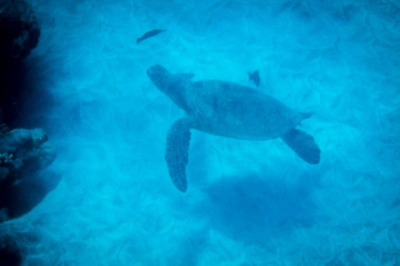 Sea turtle at the station