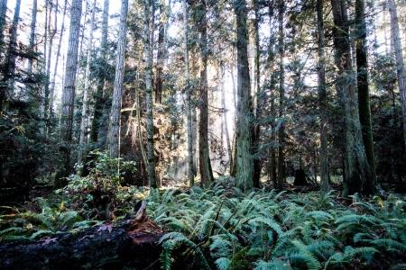 Along the trail in Elder Cedar Nature Reserve